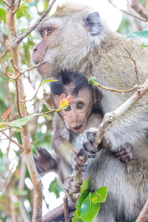 mauritius: Mauritius Monkey and Baby