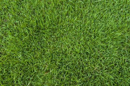 Just a beautifully green grass Stock Photo - 17533257