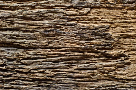 Natural old wood background