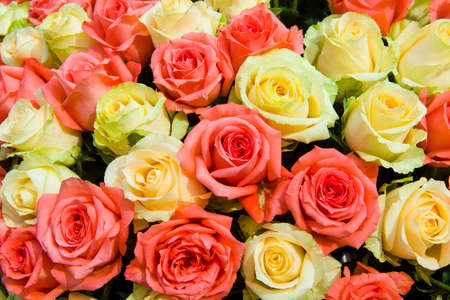 Pink and Yellow rose background