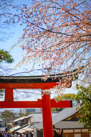 japanese ethnicity: Japanese gate with cherry blossoms Stock Photo