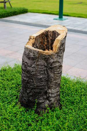 tree stump: Close up of tree stump