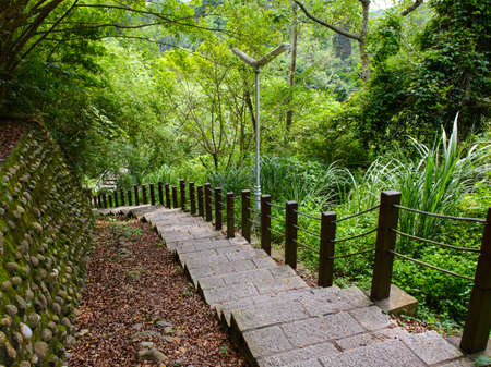 jungle scene: Staircase leading through the forest