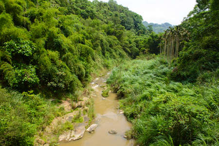 tripping: River in a mountain forest in Taiwan