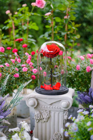 love dome: Red rose flowers in glass dome Stock Photo