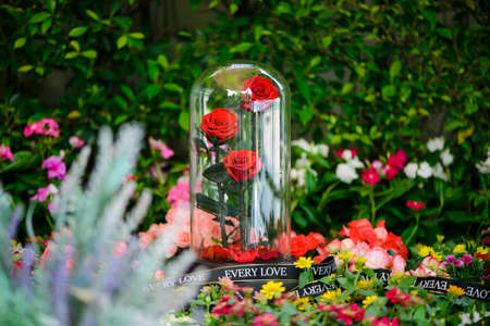 The eternal red roses in the flask on the garden Stock Photo