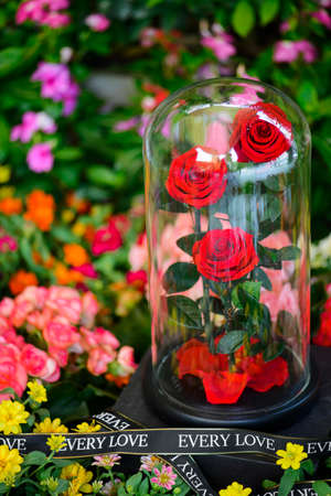 Three rose in glass dome stay on the garden