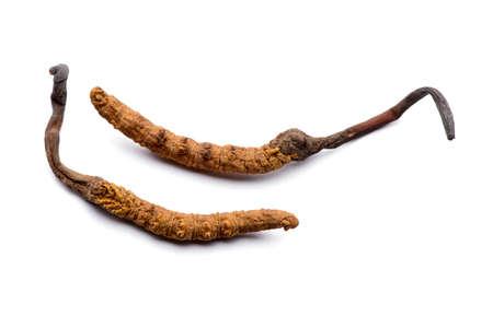 Deux cordyceps sinensis frais. Isolé sur fond blanc.