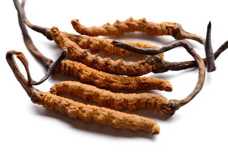 Cordycep sinensis Tibetaanse kruiden en medicijnen worden verzameld in de Himalaya Stockfoto
