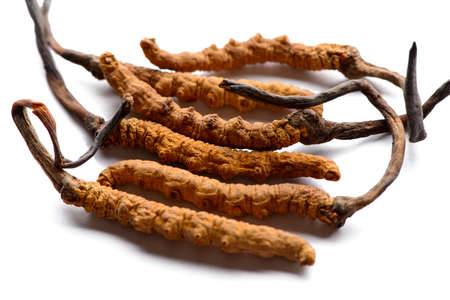 Cordycep sinensis Tibetan herbs and drugs are collected in the Himalayas Stock fotó