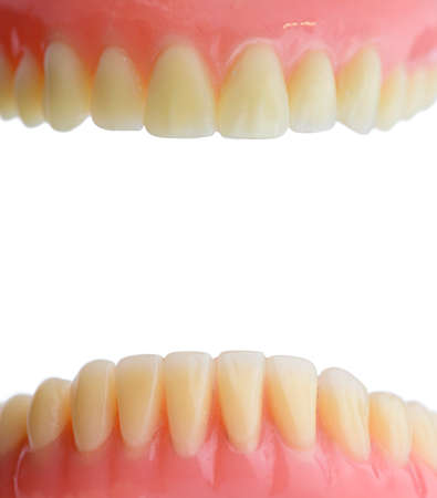 Teeth gum human mouth anatomy. Isolated on white background.
