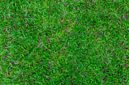 Top view of green grass texture Reklamní fotografie