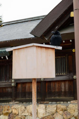 Crow on top of blank wooden board