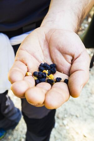 Dried fruit in the hand of a person