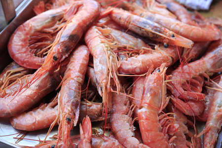 Fresh red shrimp of the mediterranean  sea Reklamní fotografie