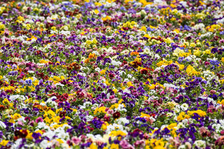 Summer background with many colorful flowers of a beautiful garden of Budapest. Stockfoto - 151084808