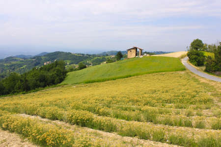 Landscape of fields used for cultivation in the Piedmont area in Italy 写真素材