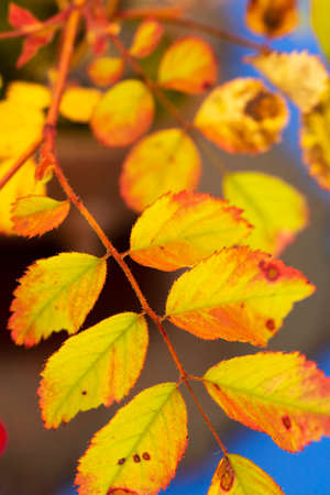 Autumn yellow leaf background Banque d'images