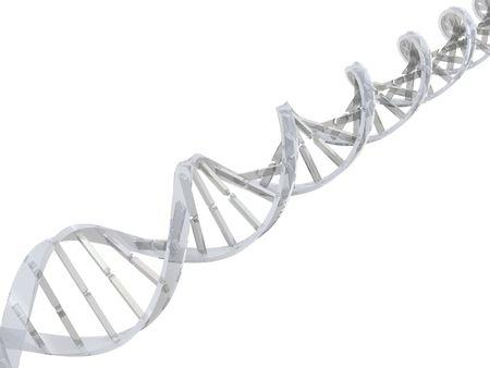 adn humano: transparente aislado ADN doble h�lice en fondo blanco