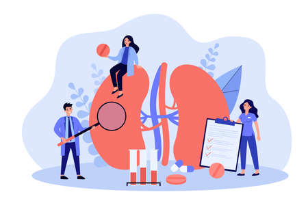 Experienced tiny doctors examining kidneys flat vector illustration. Cartoon medical specialists studying donor inner organ. Medicine, physiology and pharmacy research concept Illustration