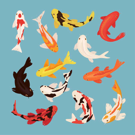 Cartoon koi carps vector illustrations set. Collection of red and gold oriental fishes swimming in water isolated on blue background. Traditional japanese, chinese botanical garden, zen concept