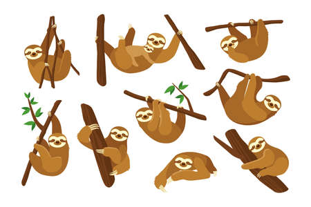 Cute sloth on branch flat pictures collection. Cartoon funny sloth hanging on tree branch, sleeping, smiling isolated vector illustrations. Animals and wildlife concept Ilustração