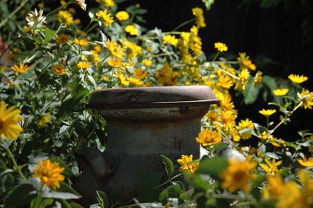 An old milk can lid rises above a miriad of flowers.