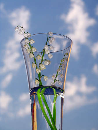 magic lily: lily of the valley - detail