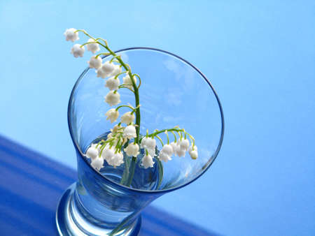 lily of the valley over blue background photo
