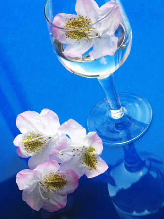 laurel and glass of water photo