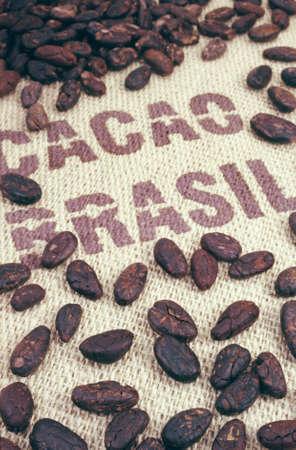 cacao beans: Cacao en grano y arpillera Foto de archivo