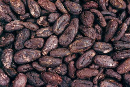 cacao beans: Cacao en grano - de fondo