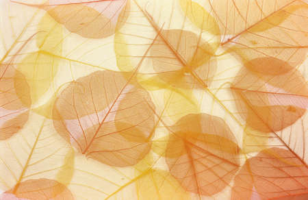 pile of leaves: Dry colored leaves - background Stock Photo