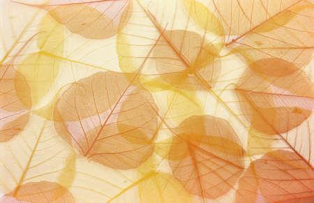 Hojas secas de color - fondo Foto de archivo
