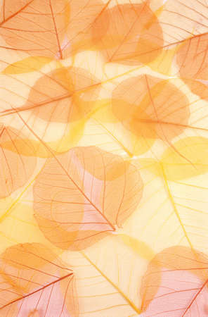 Dry colored leaves - background photo