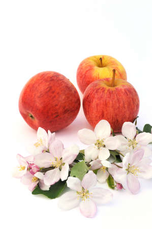 Apples and apple-tree blossoms Stock Photo - 5820484