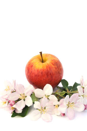 Apples and apple-tree blossoms Stock Photo - 5846457