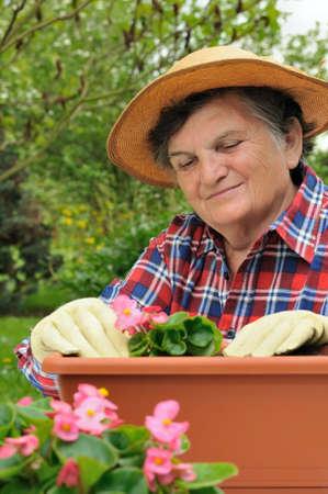replanting: Senior woman - gardening