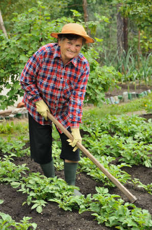gardening gloves: Senior woman gardening