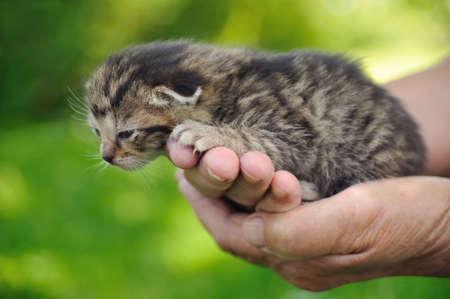 Senior�s hands holding little kitten photo