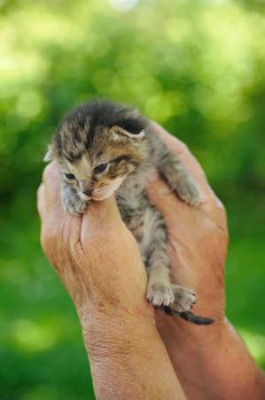 Senior's hands holding little kitten photo