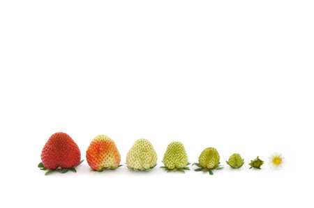 vitamines: Strawberry growth isolated on white