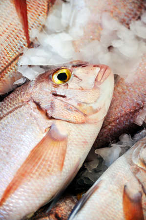 Fresh Red Snapper, market of Madeira, Portugal photo