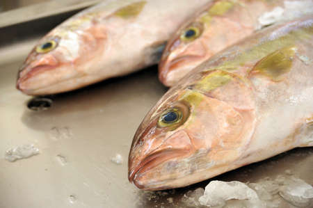 Fresh Red Snapper, market of Madeira, Portugal Stock Photo - 7161164