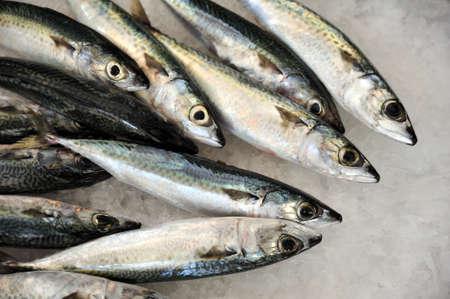 Fresh mackeler fish, market of Madeira, Portugal photo