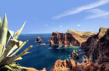 agave: East  coast of Madeira island - Ponta de Sao Lourenco Stock Photo