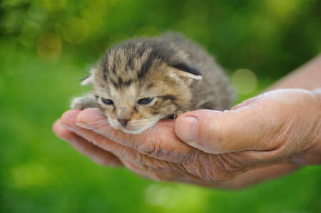75 80: Seniors hands holding little kitten Stock Photo