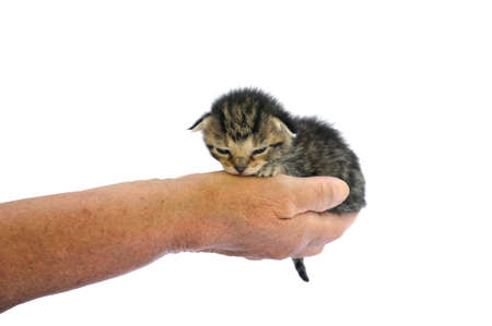 75 80: Seniors hands holding kitten