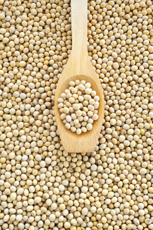 soya bean plant: Wooden spoon and dried soybeans