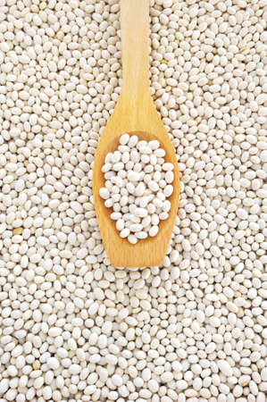 Wooden spoon and dried white navy beans photo
